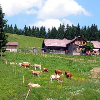 Anlaufalm im Reichraminger Hintergebirge © Zeiselberger