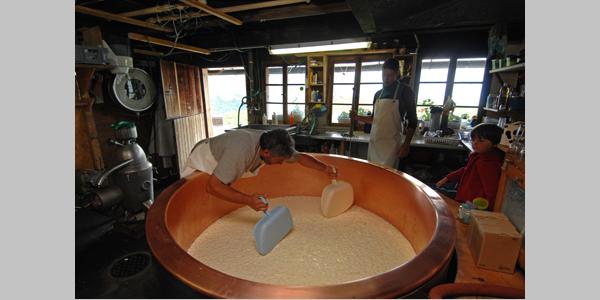 Traditionelle Käseverarbeitung auf der Alp im Isenthal