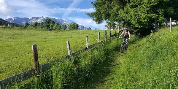 Horner Trail - Start