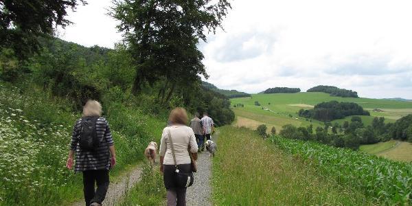 Am Fuß des Welsberges entlang.