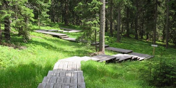 Dom des Waldes