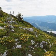 The summit of Pršivec in full blossom