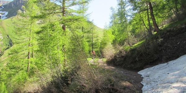 Aufstieg im Teischnitzgraben