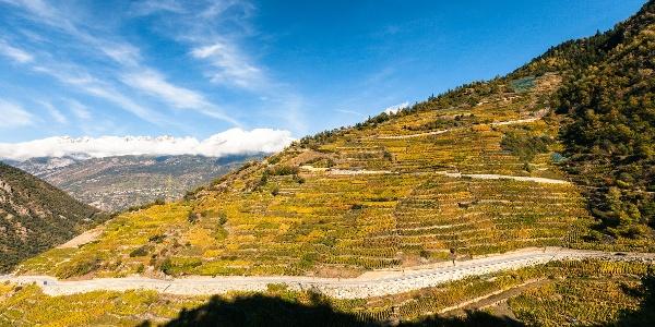 Europe's highest vineyard in Visperterminen