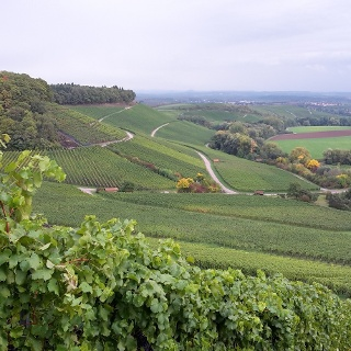 Zweifelberg-Panorama