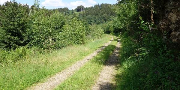 Zwischen Kränenberg und Hohhardt lässt es sich gemütlich wandern