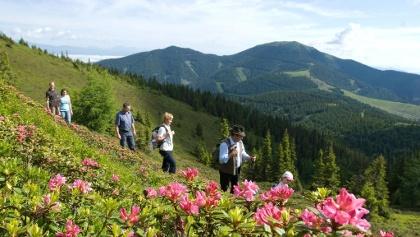 Wandern auf der Hirschegger-Alm
