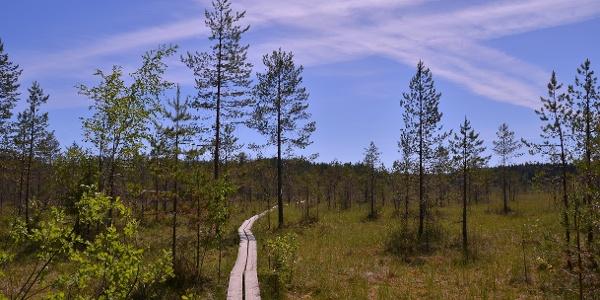 Radweg durch Sumpfnatur und Kalklandschaft