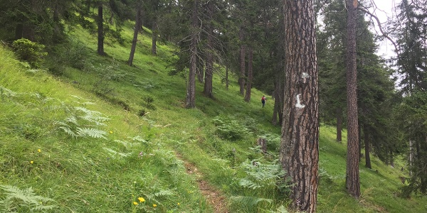 The trail from Elbigenalp to Stanzach