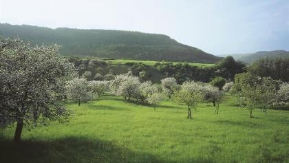 Blick auf das Ferschweiler Plateau