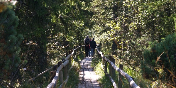 Bohlenweg Wildsee