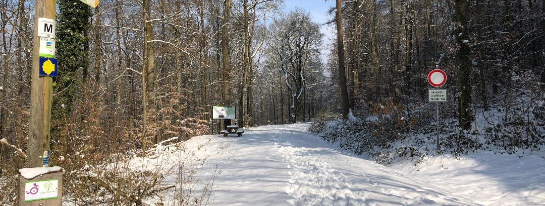 Walking in the Winter Wonderland