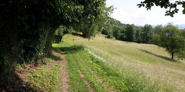 Juraweide