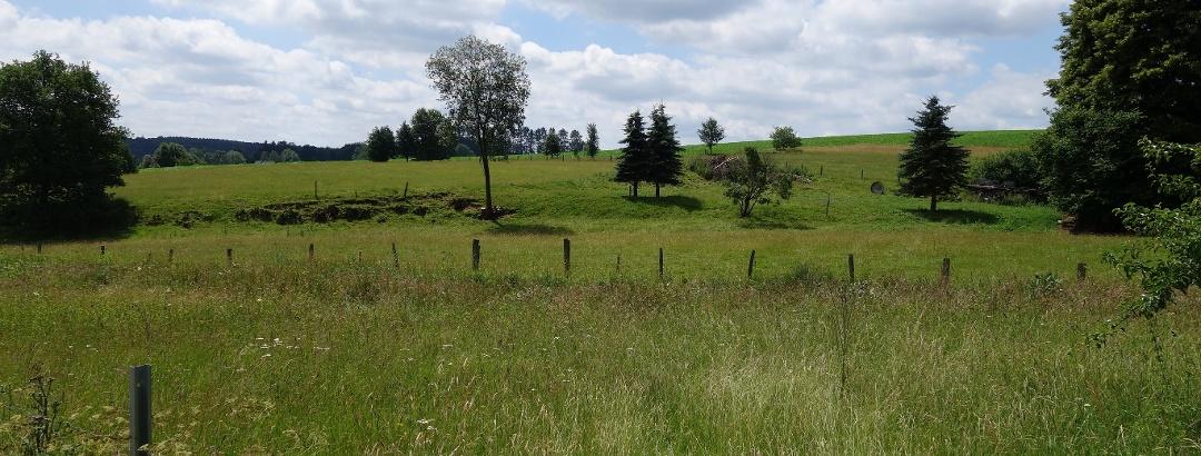 Wiesen und Weiden entlang des (Spazier-)Wanderweges
