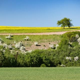Maifeldlandschaft