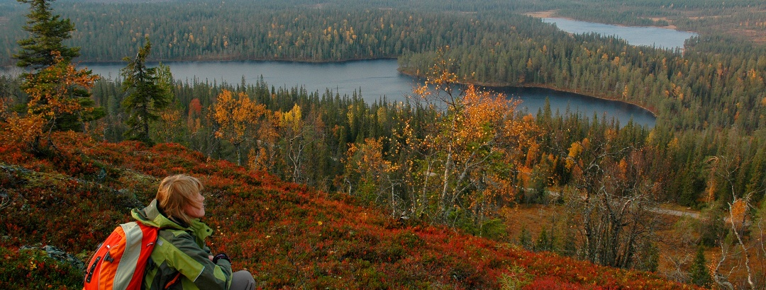 Hiker admiring autumn colours in Riisitunturi National Park