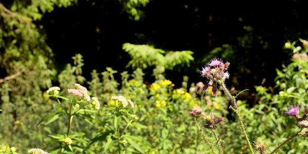 Extensiv bewirtschaftete kleine Wiesen im unteren Langenbachtal