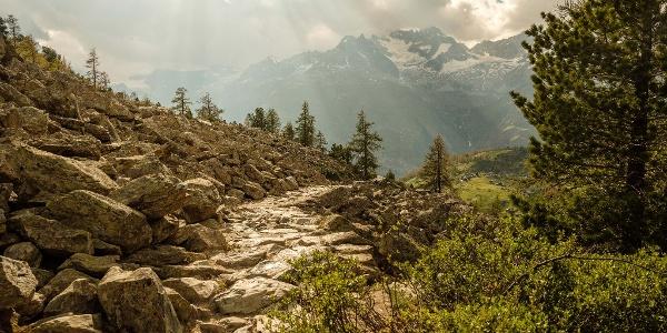 Découvrez la nature et sa beauté le long de ce chemin.
