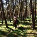 Federnder Waldboden