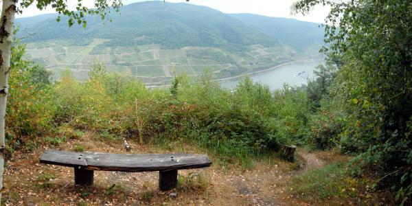 Aussichtspunkt Martinspfad unterhalb 7-Burgen-Blick