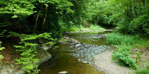 Flussbett der Lieser_Lieserpfad: Etappe 3: Manderscheid-Wittlich