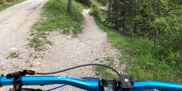 Up and downtrail