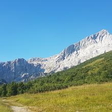 Blick auf die Alpspitze nach erstem Waldstück