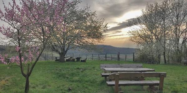 Kirschblüte im Steigerwald