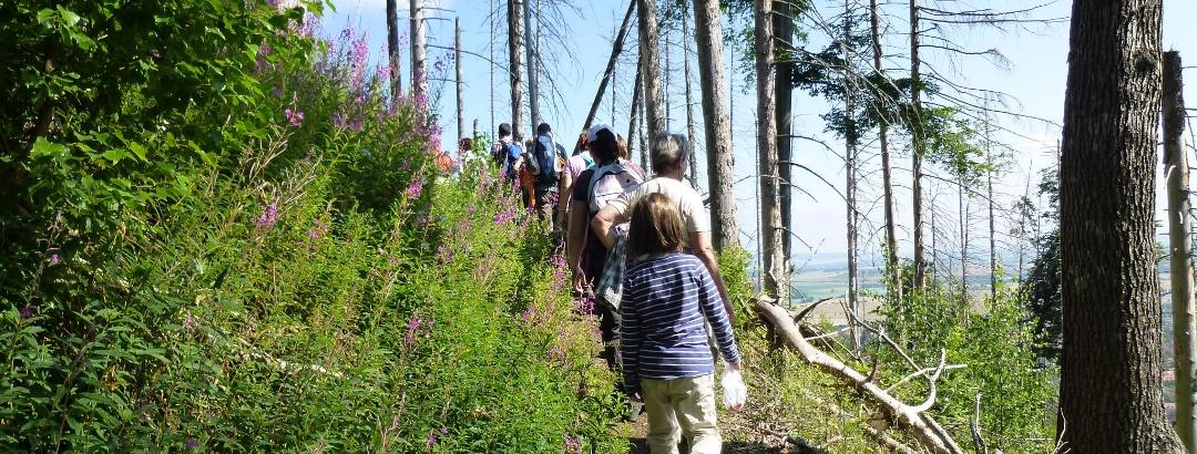 Wandergruppe auf dem Borkenkäferpfad