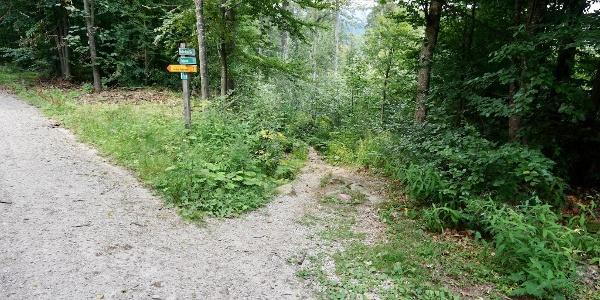 Abzweigung rechts vom Forstweg zum Pfad zum Großen Arbersee