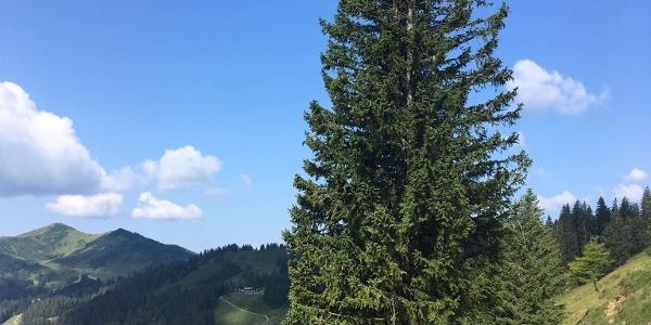 Blick zum Berghaus Schwaben