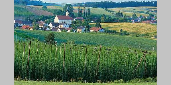 Hopfenlandschaft / Hopfentour