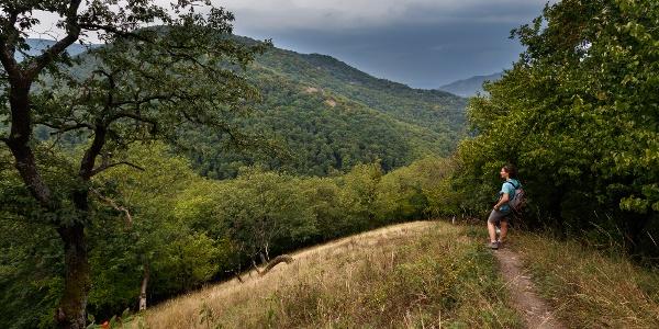 Kilátás a Spartacus-vadászösvény felső szakaszáról