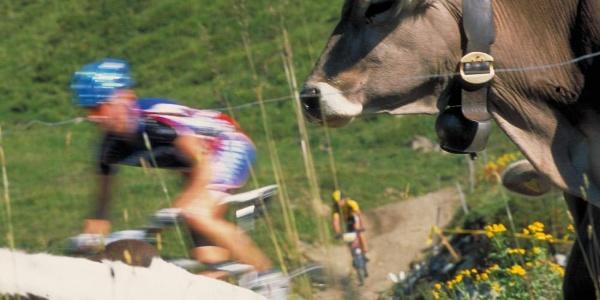 Kuh-le Begegnungen auf der Tour