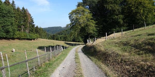 Ashpahltierte Wegesabschnitte und breite Forstwege begleiten uns
