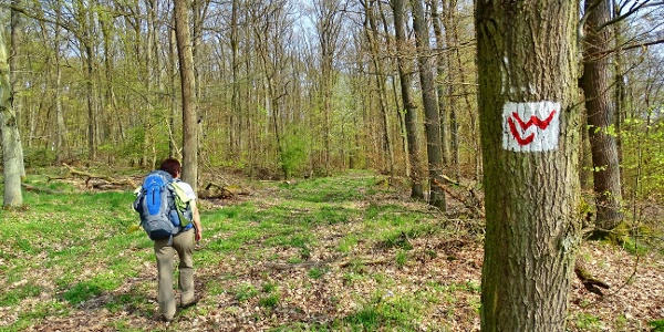 Durch den Wald bei Fronhausen