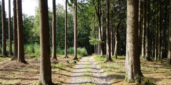 Waldabschnitt auf dem Herlinghauser Berg
