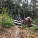 Einige Umgestürzte Bäume blockieren den Hauptweg