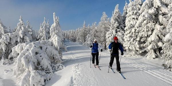 Skiläufer