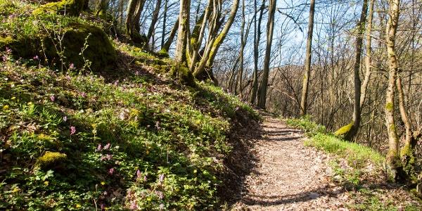 Naturbelassene Wanderweg_Erlebnisweg Achterhöhe
