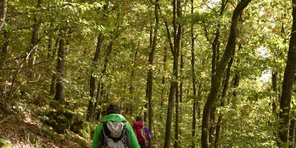Wanderen auf schmalen Wegen_Vulkaneifel-Pfad: Grafschaft-Pfad