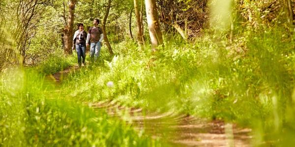 Wandern auf herrlichen Wegen_Vulkaneifel-Pfad: Vulcano-Pfad Schleife West