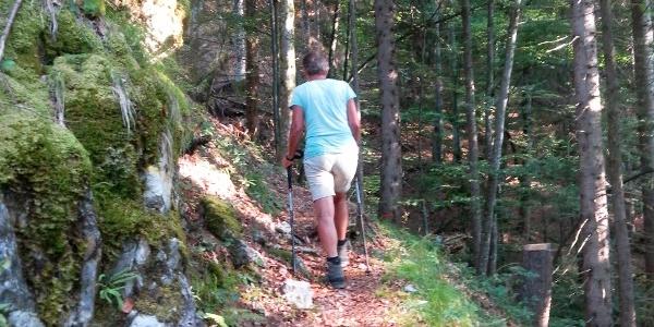 Bewaldete Südflanke