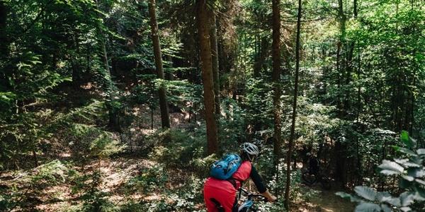 Shorty Trail