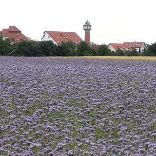 Wallstadter Wasserturm