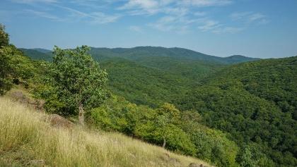 A Magas-Börzsöny hatalmas erdőrengetege (Rustok-hegy)