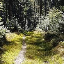 Wunderschöner Waldweg beim Abgang Steinernes Kreuz