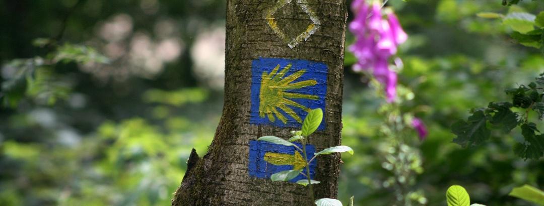 Die Markierung des Jakobsweges ist weltweit bekannt. Auch im Siegerland ist sie zu finden