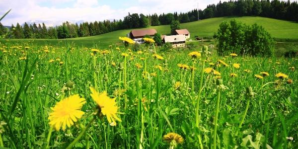 Der Bauernhof Hochreiter am Weg