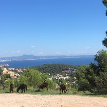 Picture of Hiking Trail: Zum Coll des Juscons der Serra de na Burguesa • Mallorca (24.09.2018 19:37:39 #2)